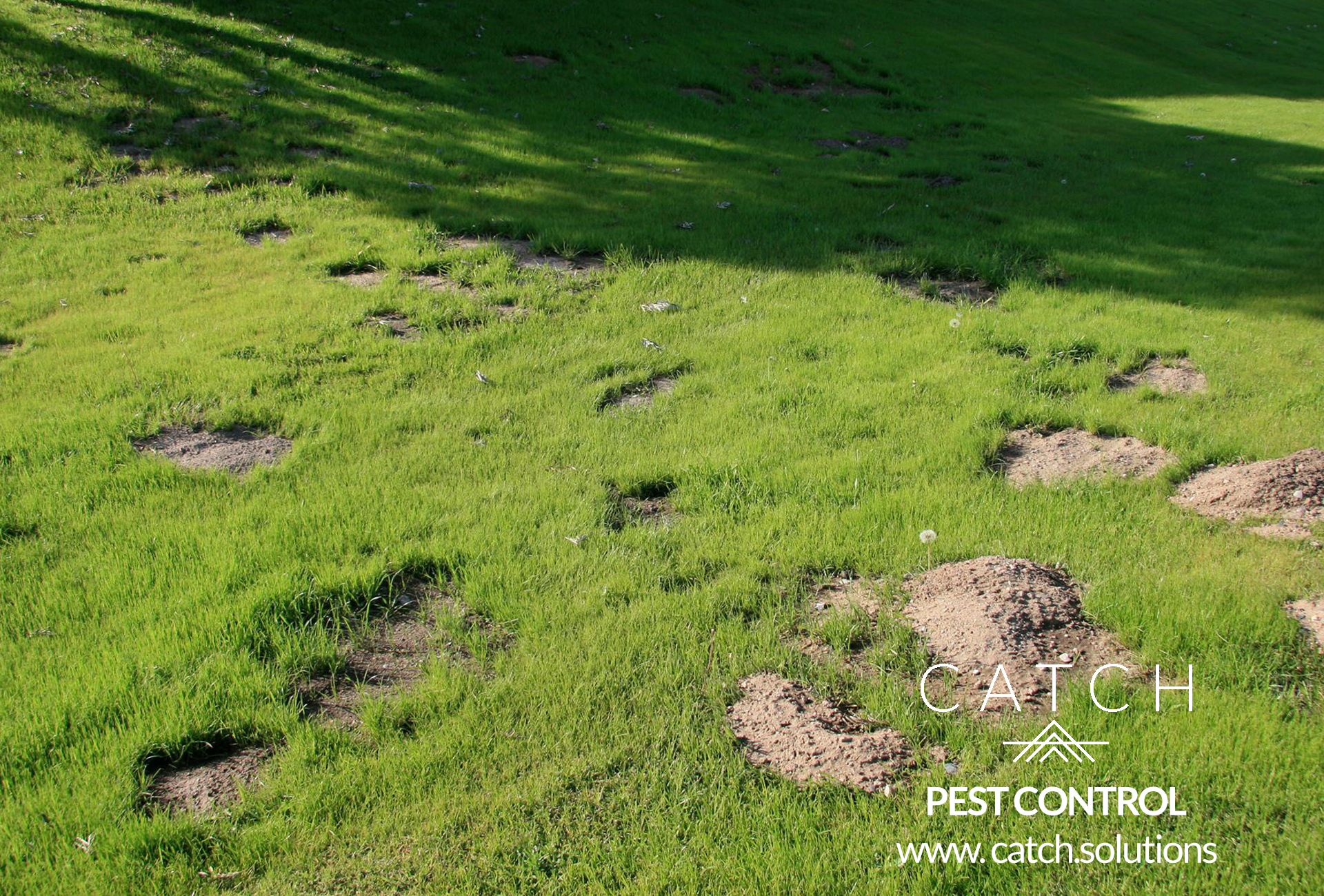 gopher pest control removal services child and pet safe